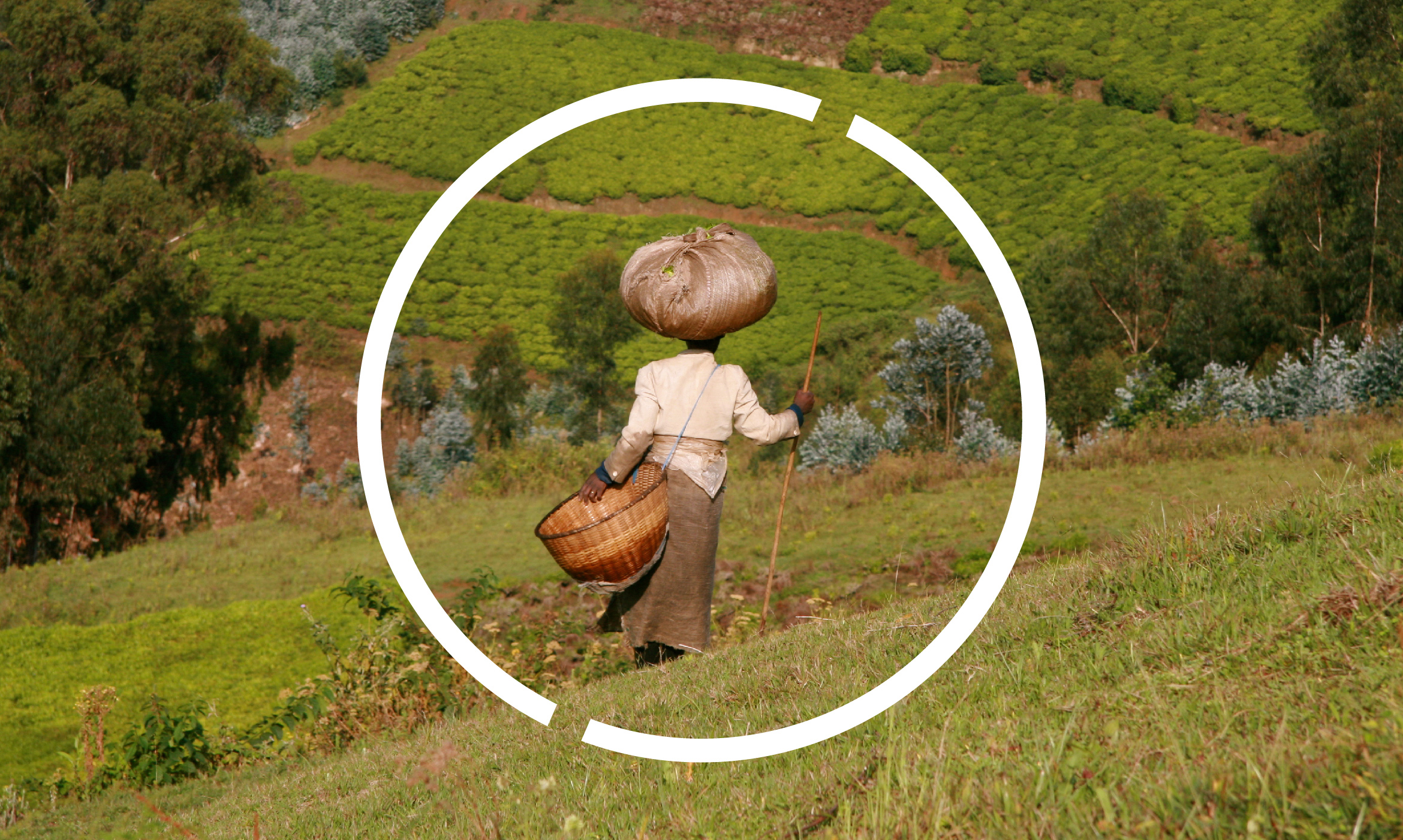 This powerful photo of a woman harvesting in a field and carrying what she has gathered on her head is framed by the Institute for Sustainable Development graphic element of a circle and two empty spaces that represent the tilt of the earth' axis at 23.5 degrees.
