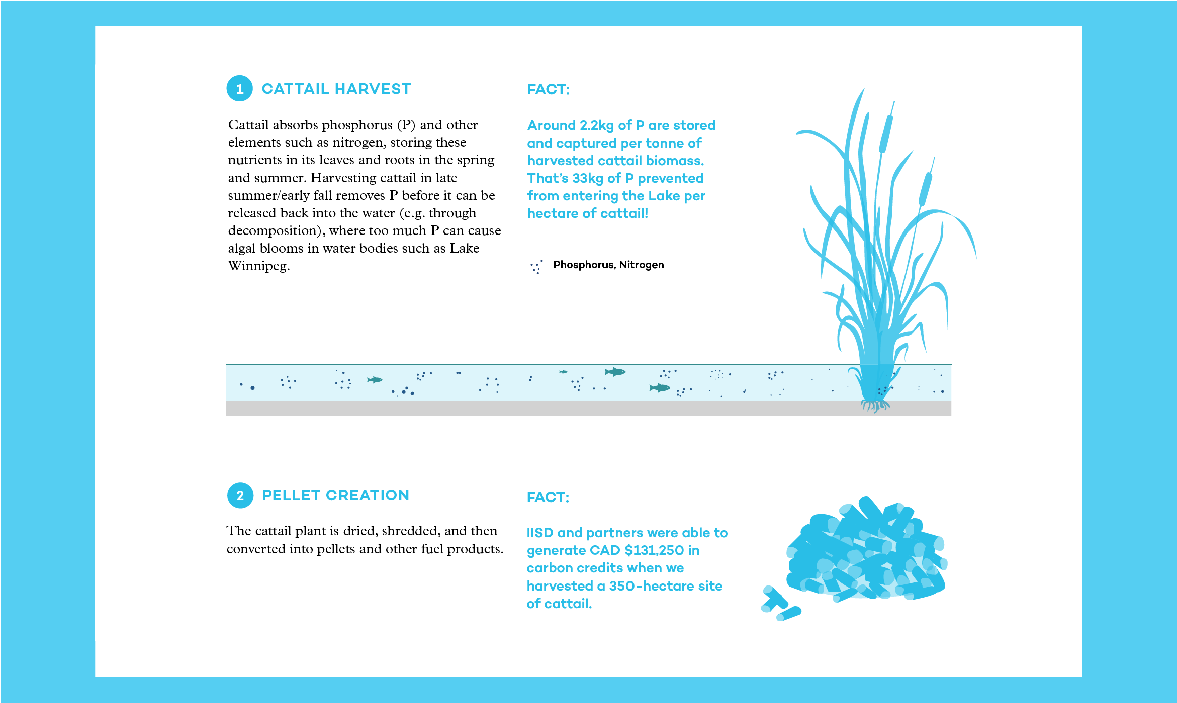 Illustration describing Cattail Harvest and Pellet Creation extracted from the 2015 Annual Report.